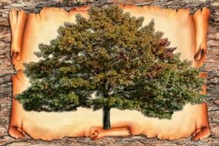 генеалогическое дерево шаблон для заполнения скачать бесплатно - фото 4